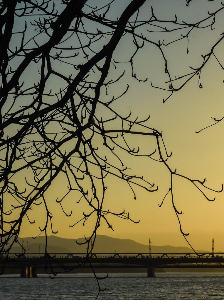 Xứ Huế đẹp nao lòng mùa cây bàng lá đỏ - ảnh 15