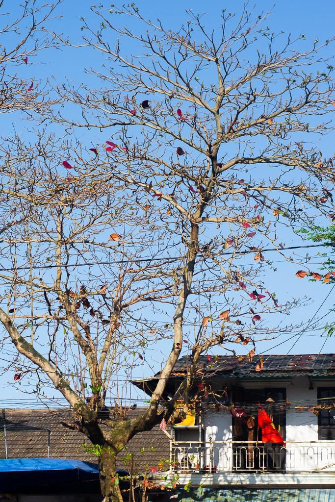 Xứ Huế đẹp nao lòng mùa cây bàng lá đỏ - ảnh 3