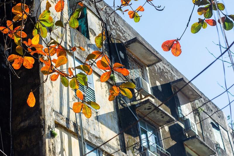 Xứ Huế đẹp nao lòng mùa cây bàng lá đỏ - ảnh 13