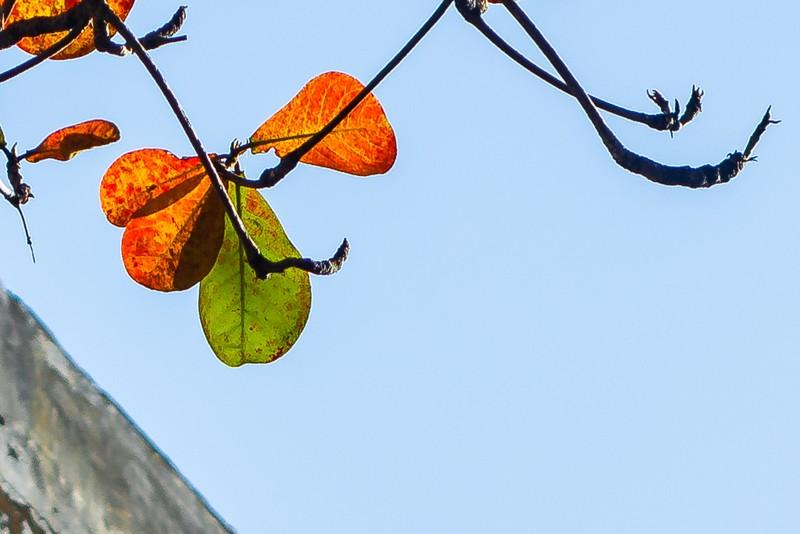 Xứ Huế đẹp nao lòng mùa cây bàng lá đỏ - ảnh 6
