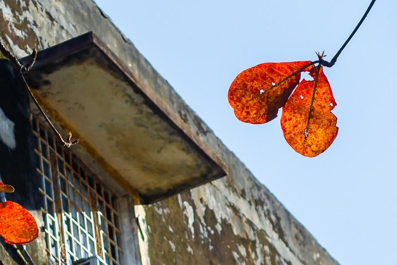 Xứ Huế đẹp nao lòng mùa cây bàng lá đỏ - ảnh 10