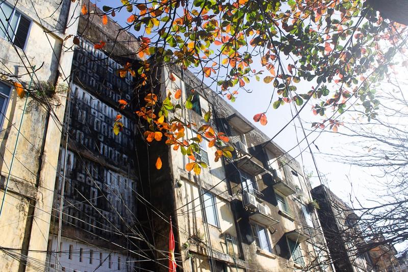 Xứ Huế đẹp nao lòng mùa cây bàng lá đỏ - ảnh 1