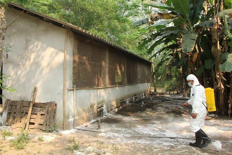 Phát hiện thêm ổ dịch tả heo châu Phi tại Thừa Thiên - Huế - ảnh 2