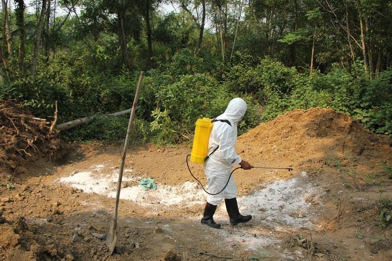 Phát hiện thêm ổ dịch tả heo châu Phi tại Thừa Thiên - Huế - ảnh 1