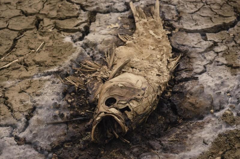 Nguy cơ mất mùa vì hạn hán ở miền Trung - ảnh 4