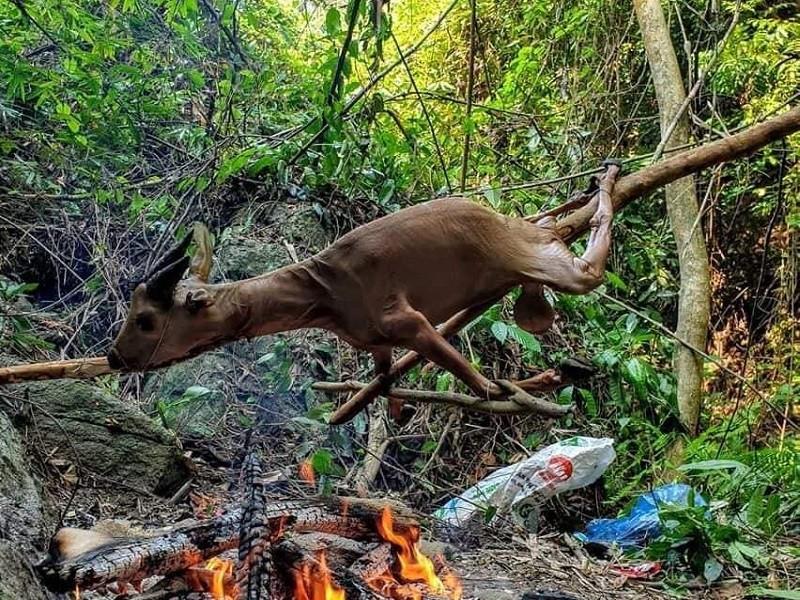 TBT tạp chí Sông Hương bác thông tin nướng động vật hoang dã - ảnh 1