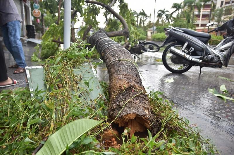 Thừa Thiên - Huế cây đổ hàng loạt, có người bị thương - ảnh 2