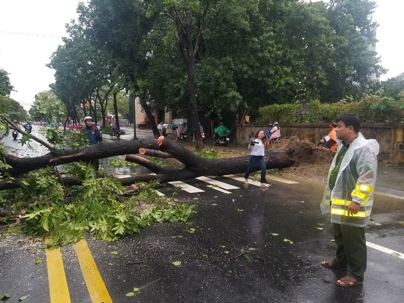 Thừa Thiên - Huế cây đổ hàng loạt, có người bị thương - ảnh 7