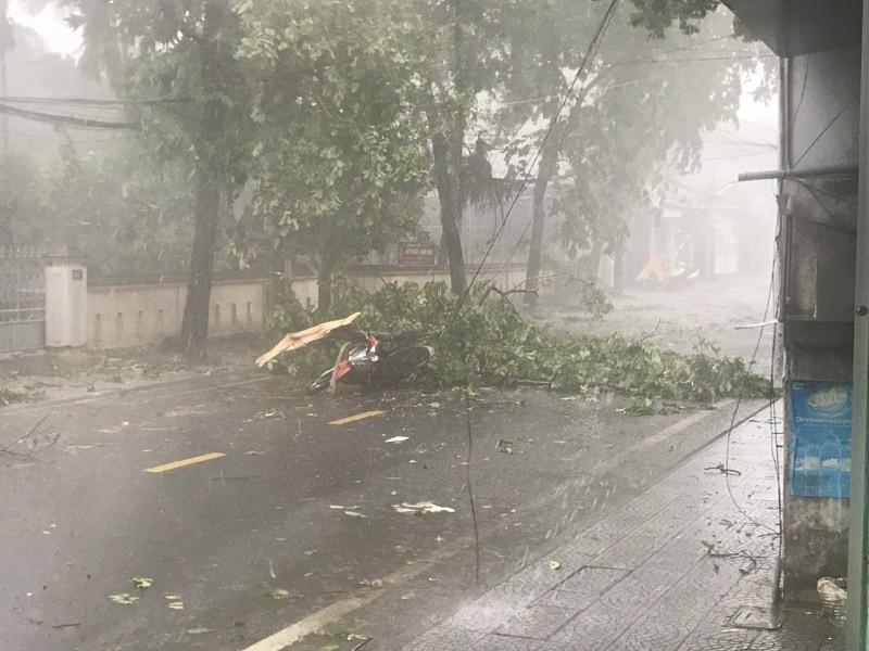 Thừa Thiên - Huế cây đổ hàng loạt, có người bị thương - ảnh 5