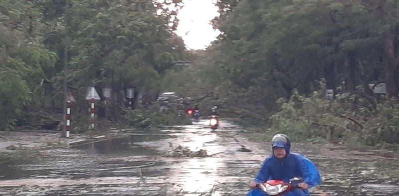 Thừa Thiên - Huế cây đổ hàng loạt, có người bị thương - ảnh 4