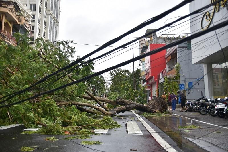 Thừa Thiên - Huế cây đổ hàng loạt, có người bị thương - ảnh 6