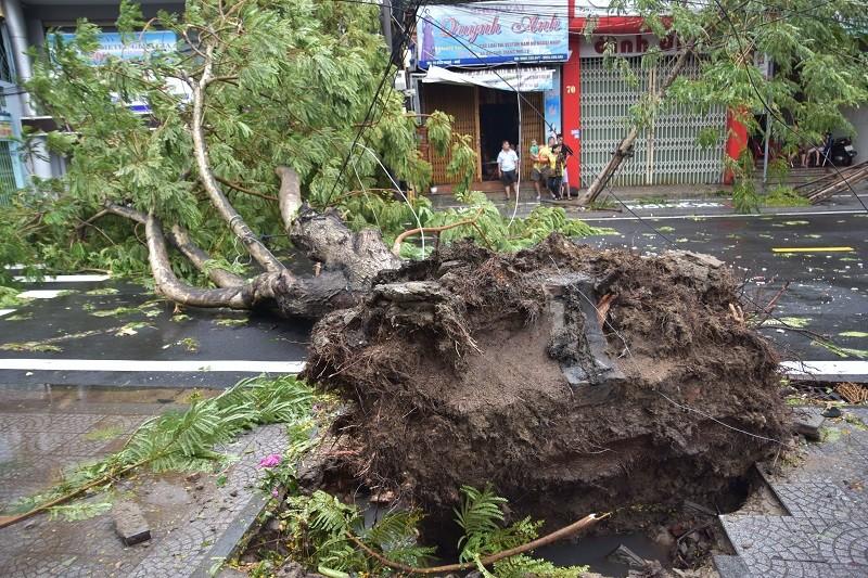 Thừa Thiên - Huế cây đổ hàng loạt, có người bị thương - ảnh 3