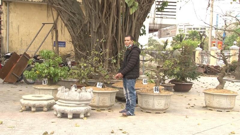 Bắt kẻ trộm hàng loạt cây mai cảnh ở Huế - ảnh 1