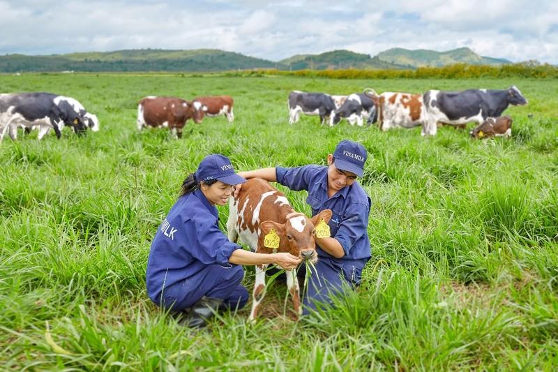 Trang trại bò sữa organic Vinamilk đạt chuẩn quốc tế - ảnh 1