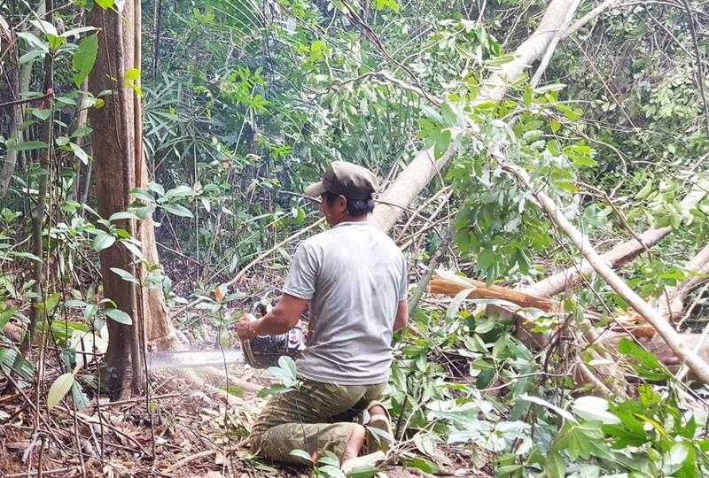 Phó thủ tướng yêu cầu báo cáo vụ phá rừng nuôi bò - ảnh 1