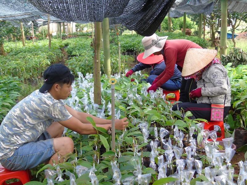 Bình Phước liên kết vùng phát triển nông nghiệp công nghệ cao - ảnh 2