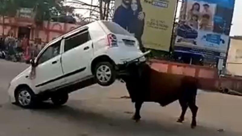 Gặp nhau giữa đường, bò tót húc tan chiếc ô tô Suzuki - ảnh 1