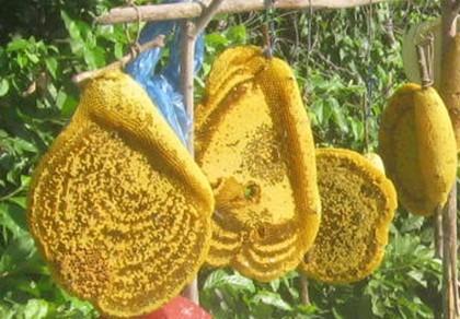 Chiêu thức lừa đảo: Mật ong rừng pha nước lã bịp người ham rẻ