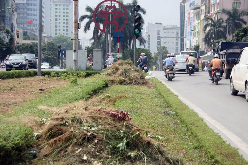 Hà Nội cắt tỉa cỏ trở lại sau 3 tháng 'án binh' - ảnh 12