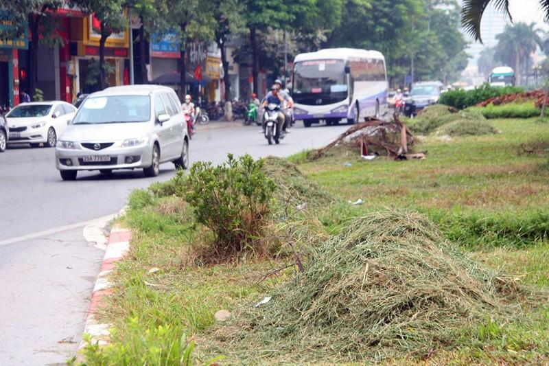 Hà Nội cắt tỉa cỏ trở lại sau 3 tháng 'án binh' - ảnh 13