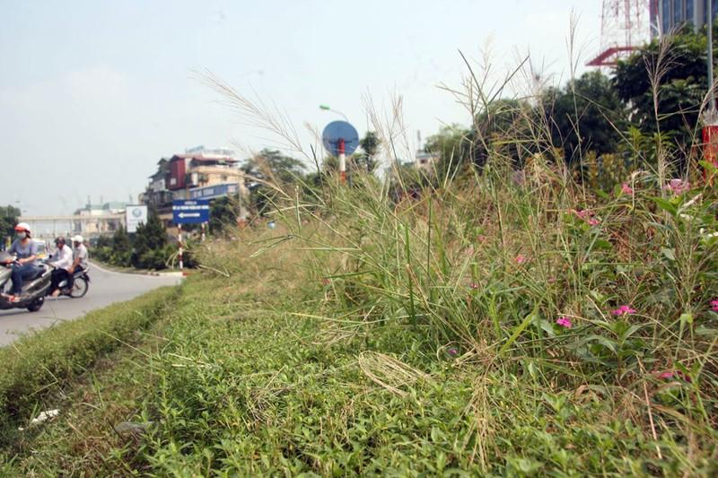 Hà Nội cắt tỉa cỏ trở lại sau 3 tháng 'án binh' - ảnh 3
