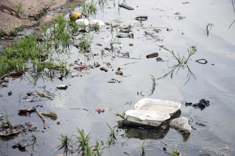 Cá lại chết nhiều ở hồ Linh Đàm - ảnh 12