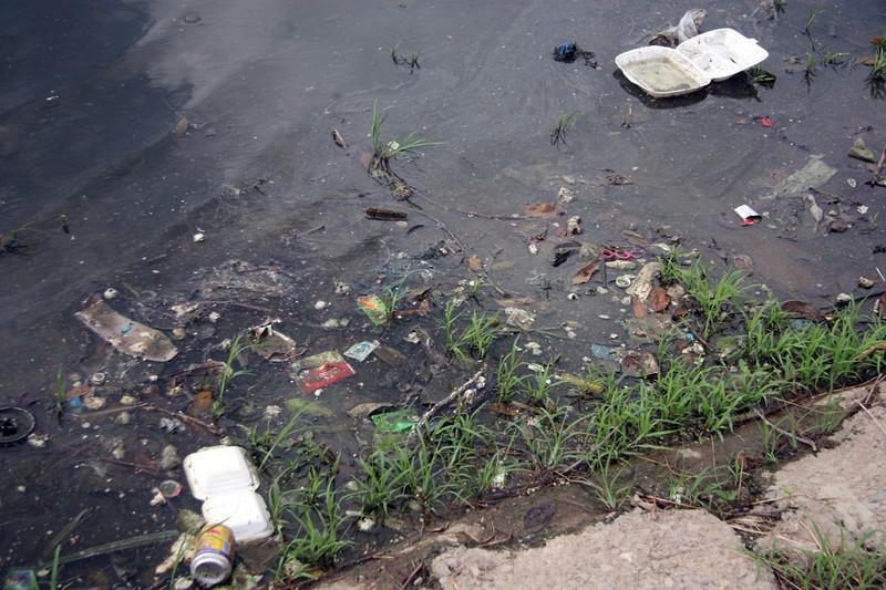 Cá lại chết nhiều ở hồ Linh Đàm - ảnh 13