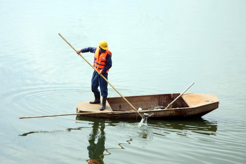 Cá lại chết nhiều ở hồ Linh Đàm - ảnh 6
