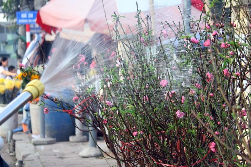 Rạng rỡ, đào Nhật Tân xuống phố phục vụ tết dương lịch - ảnh 10