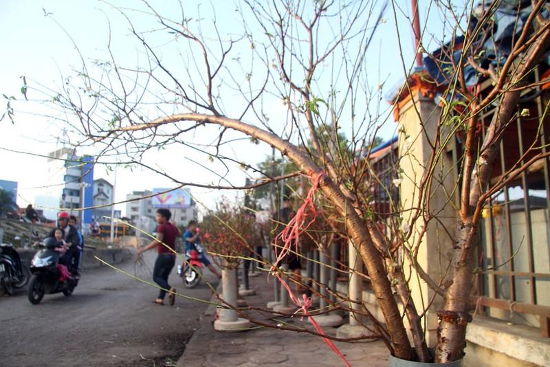 Rạng rỡ, đào Nhật Tân xuống phố phục vụ tết dương lịch - ảnh 2