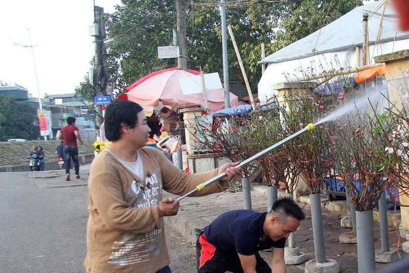 Rạng rỡ, đào Nhật Tân xuống phố phục vụ tết dương lịch - ảnh 9