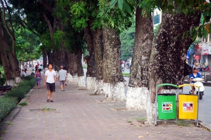Dân đội nắng đi qua những con đường từng chặt hạ cây - ảnh 1