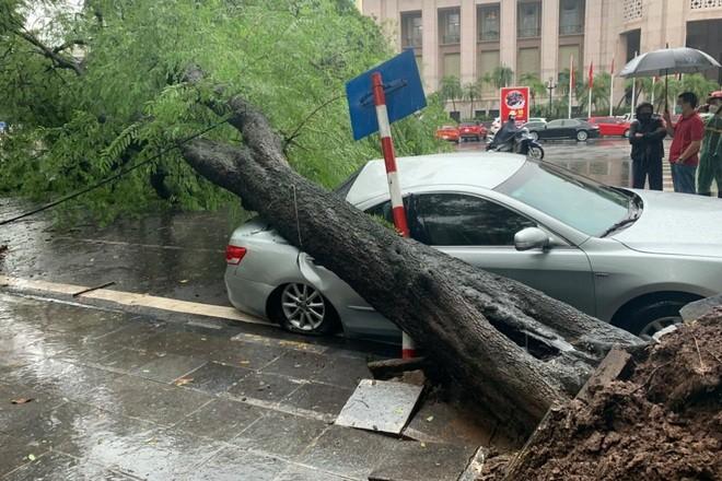 Me cổ thụ bật gốc đè vào ô tô trong cơn mưa lớn ở Hà Nội - ảnh 1