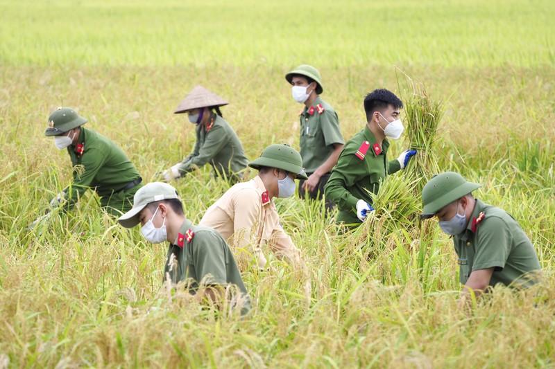 Chiến sĩ công an Yên Dũng giúp người dân bị cách ly gặt lúa - ảnh 1