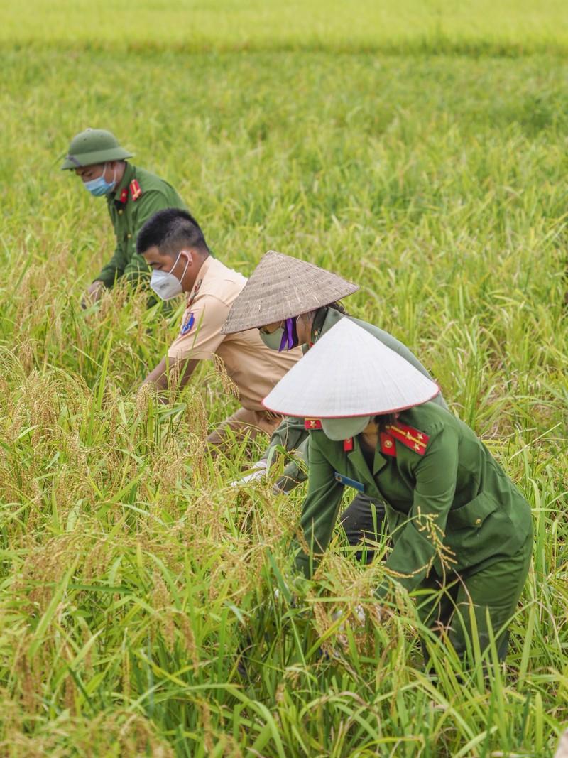 Chiến sĩ công an Yên Dũng giúp người dân bị cách ly gặt lúa - ảnh 4