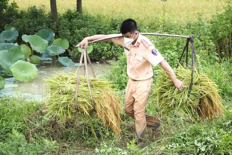 Chiến sĩ công an Yên Dũng giúp người dân bị cách ly gặt lúa - ảnh 6