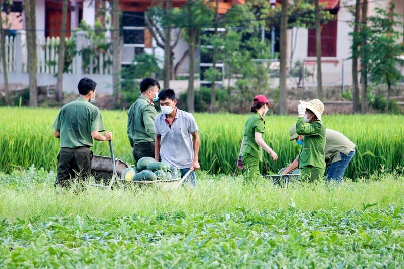 Chiến sĩ công an Yên Dũng giúp người dân bị cách ly gặt lúa - ảnh 8