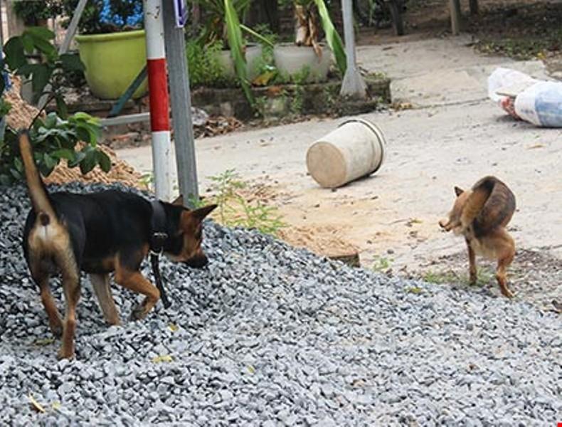 Hàng xóm đánh nhau chấn thương sọ não vì... con chó  - ảnh 1