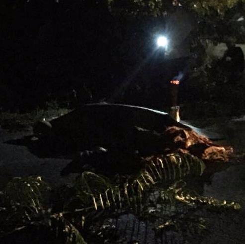 Nghệ An: Người đàn ông chết lõa thể cách nhà hơn 100 m - ảnh 1