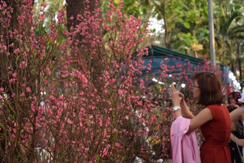 Người Sài Gòn ngẩn ngơ ngắm hoa đào đất Bắc - ảnh 6