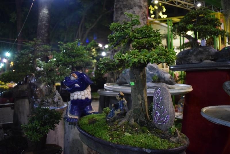 Cây kiểng, bonsai độc lạ làm khách hàng trầm trồ - ảnh 7