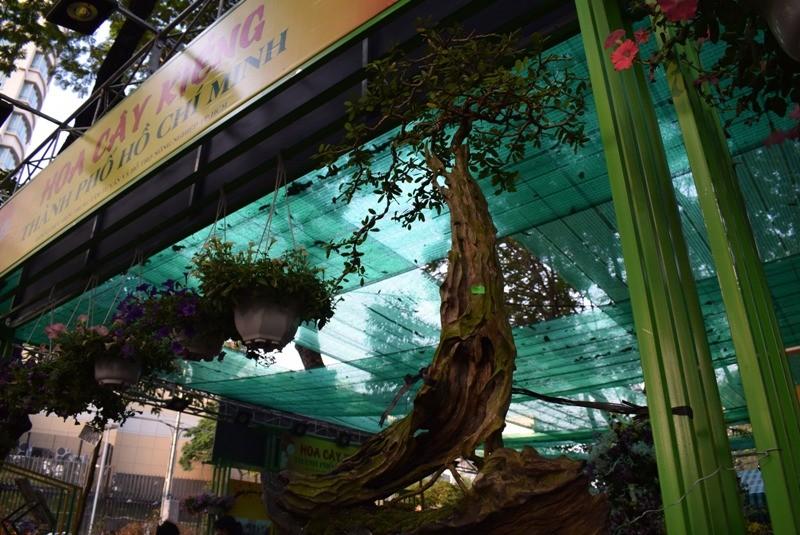 Cây kiểng, bonsai độc lạ làm khách hàng trầm trồ - ảnh 2
