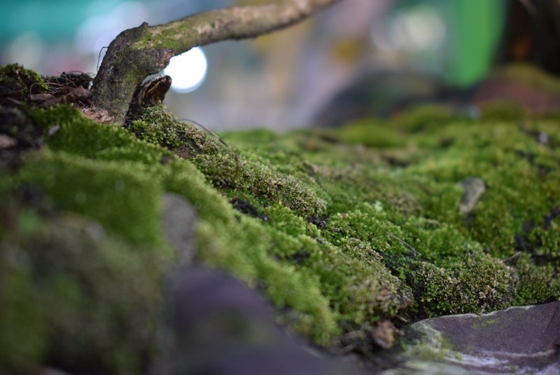 Cây kiểng, bonsai độc lạ làm khách hàng trầm trồ - ảnh 3