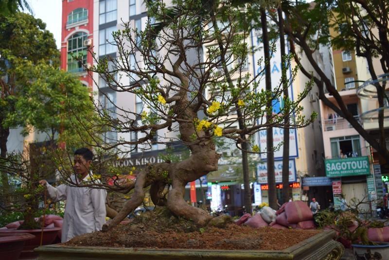Cây kiểng, bonsai độc lạ làm khách hàng trầm trồ - ảnh 4