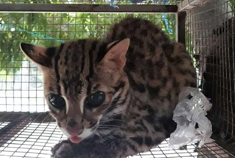 Hơn 140 cá thể động vật hoang dã được giải cứu từ đầu 2019 - ảnh 1