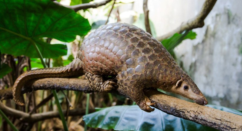 WWF kêu gọi chấm dứt buôn bán và tiêu thụ động vật hoang dã - ảnh 1