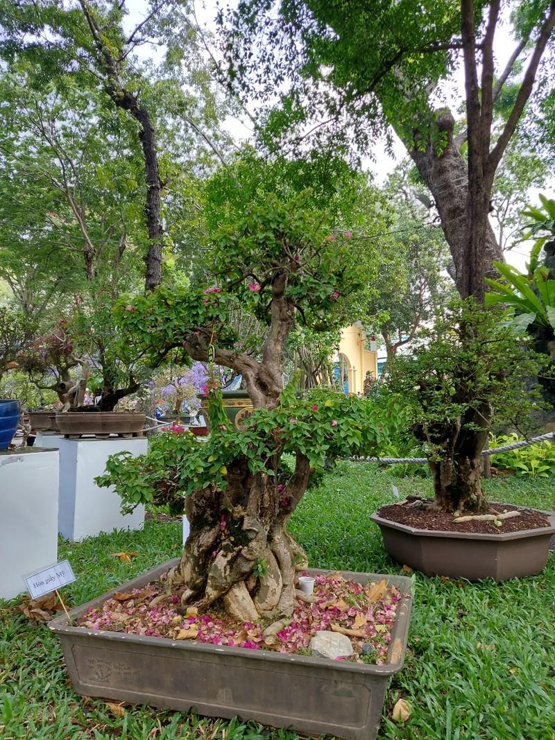 Bịt khẩu trang du xuân ngắm kì hoa dị thảo ở công viên Tao Đàn - ảnh 5