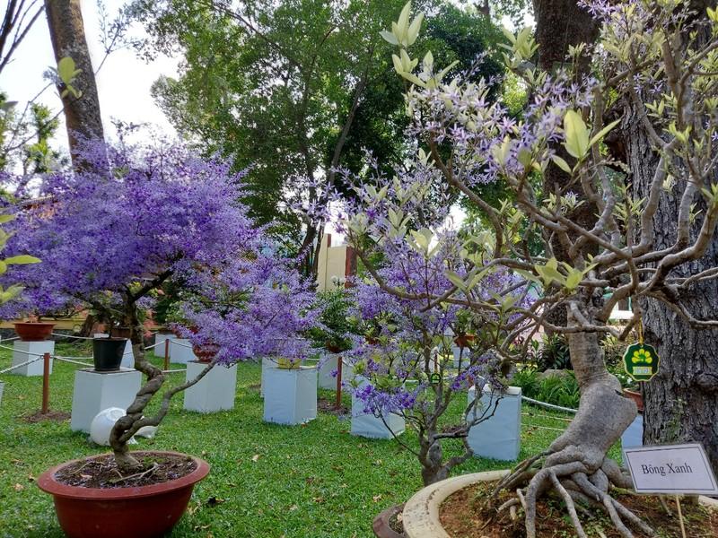 Bịt khẩu trang du xuân ngắm kì hoa dị thảo ở công viên Tao Đàn - ảnh 6