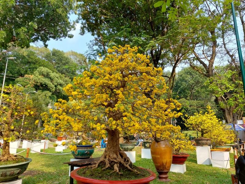Bịt khẩu trang du xuân ngắm kì hoa dị thảo ở công viên Tao Đàn - ảnh 9