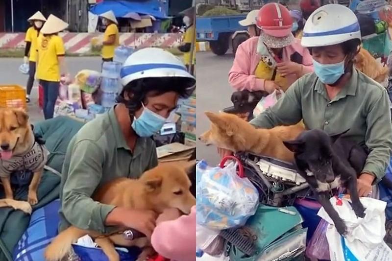 Hồng Ánh nghẹn ngào khi hay tin đàn chó bị tiêu huỷ ở Cà Mau - ảnh 1